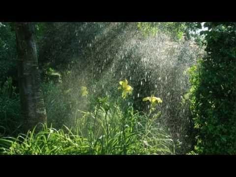 Звуки природы. Дождь в лесу