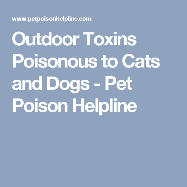 Outdoor Toxins Poisonous to Cats and Dogs - Pet Poison Helpline