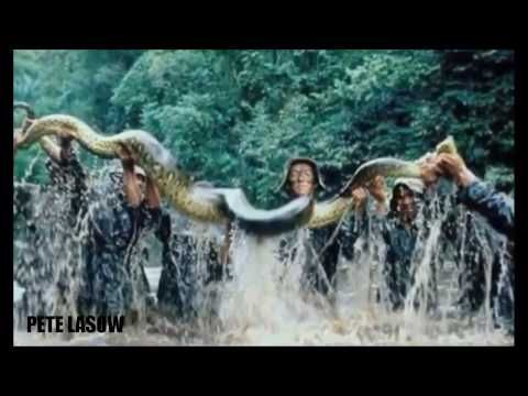 World's biggest snake found in Amazon river - Biggest python snake - Giant anaconda Largest snake