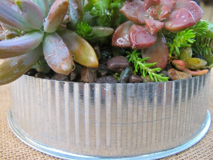 Best 20+ Dish garden ideas on Pinterest   Suculent plants ...