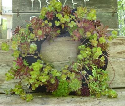 Creative and Frugal DIY Garden Art Projects: You won't believe what hold this succulent wreath together!