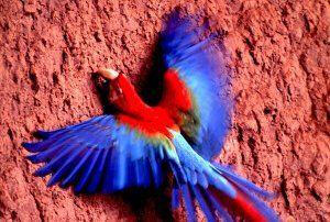 Bird Watching in Cordillera Blanca