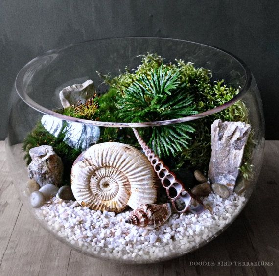 Ammonite Fossil Orb Terrarium filled with live moss, fern-like Selaginella fronds, and a genuine ammonite snail shell fossil. Ammonites are a prehistoric and extinct group of marine invertebrate animals from the Jurassic period.