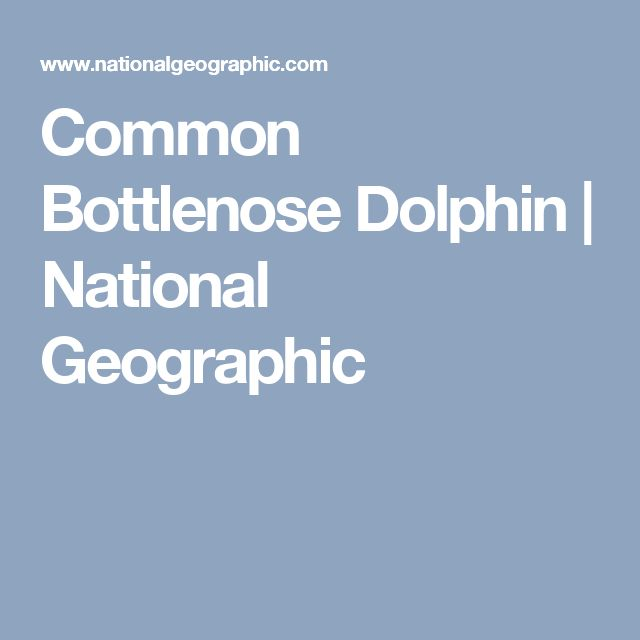 Common Bottlenose Dolphin | National Geographic