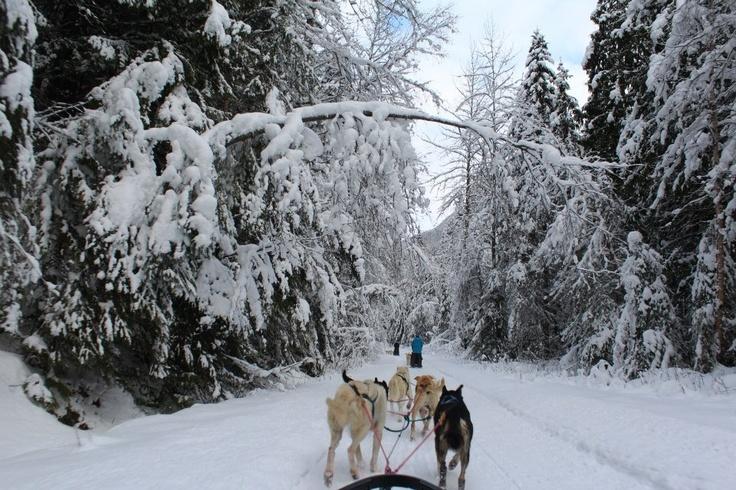 Dog sledding in Valemont, BC, Canada
