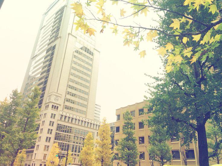 2014-12-04  乾門   昨日から始まった皇居乾門通り抜けで、朝の東京駅周辺にはたくさんの人が(*^^*)  桜と紅葉、一度は見てみたいな〜♪  いつもの交差点も黄色に染まってきました〜♪