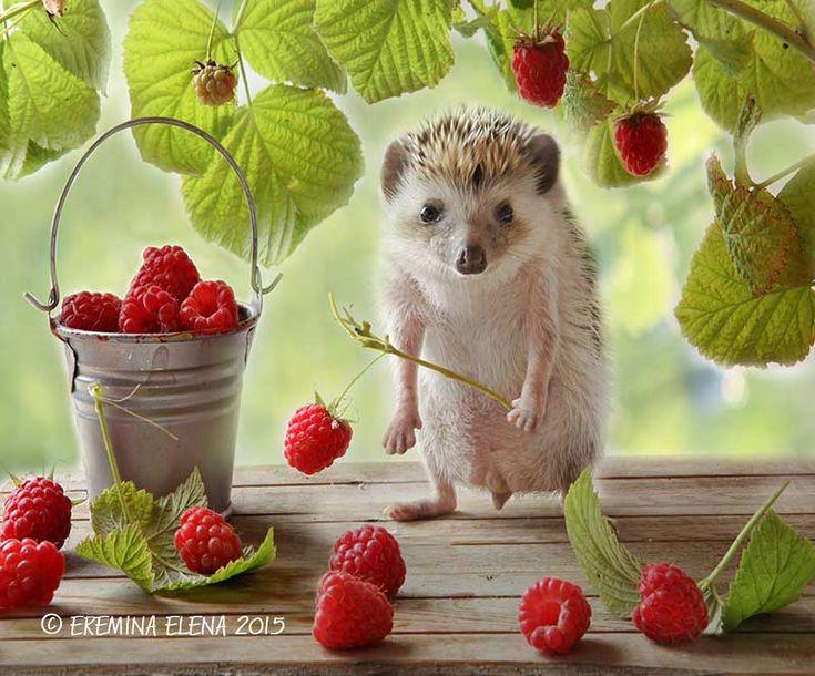 картинка ежик с ягодками начисления кэшбэка, лимиты