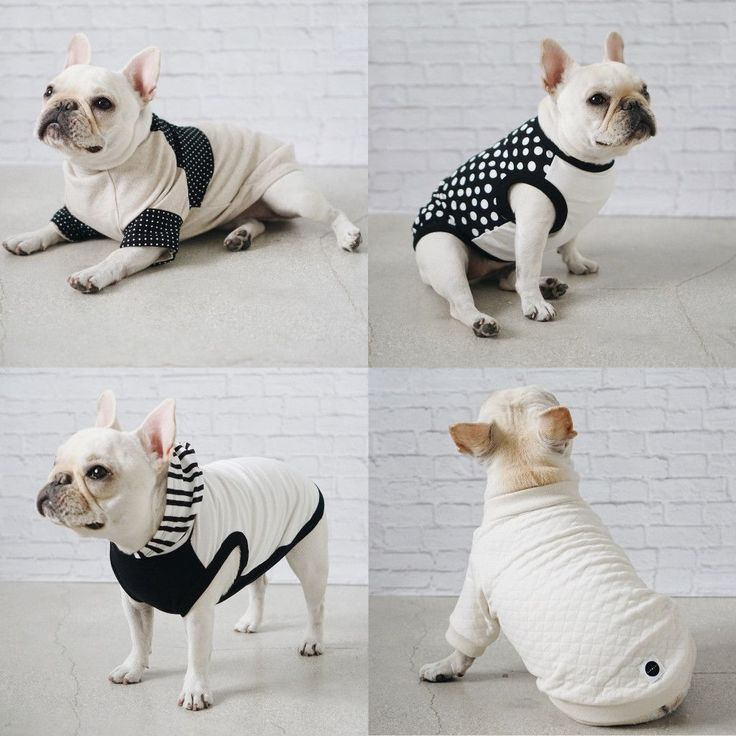 French Bulldog, wearing Modern Dog Clothing and Accessories from Pipolli. #DogClothes
