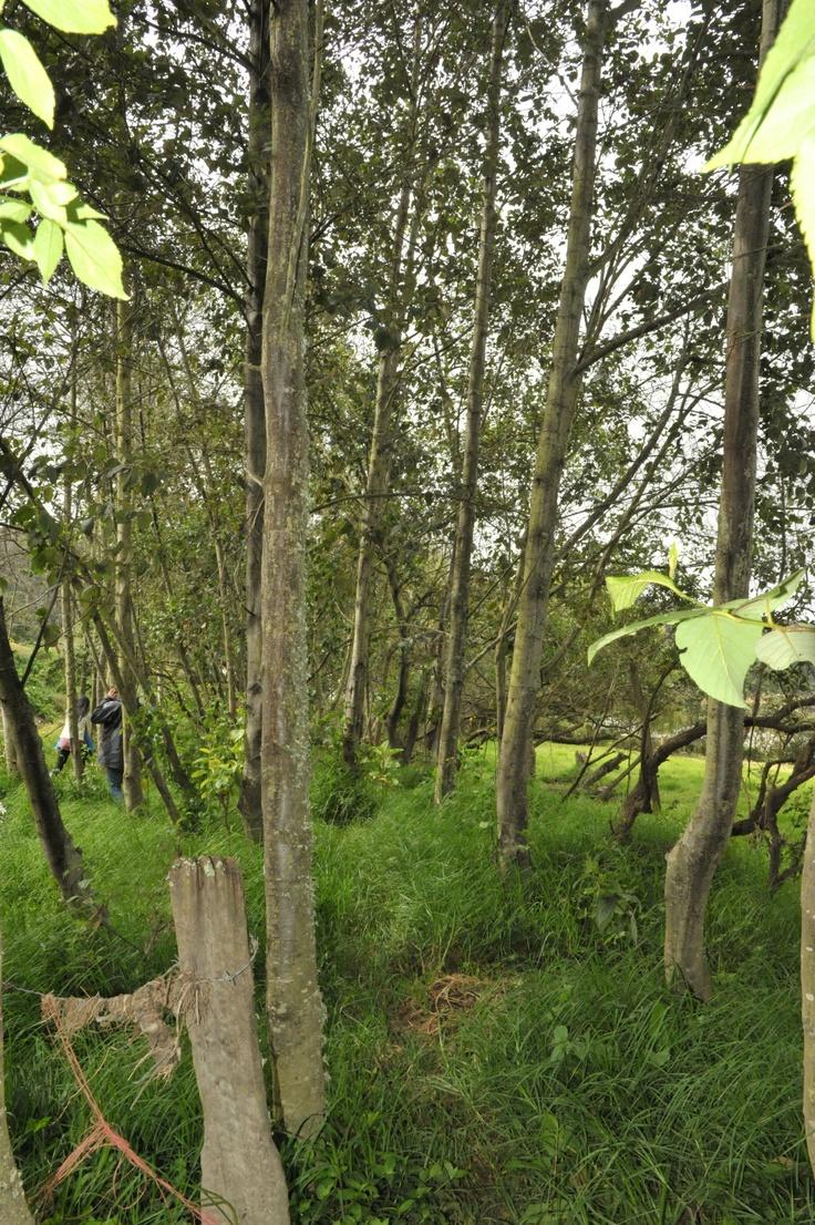 El río necesita más árboles para no desaparecer. #AdoptaUnArbol y contagia a todos para lograr nuestra meta. Visita www.adoptaunarbol.co