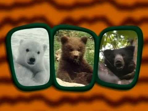 Αρκούδες- Ο μαγικός κόσμος των ζώων