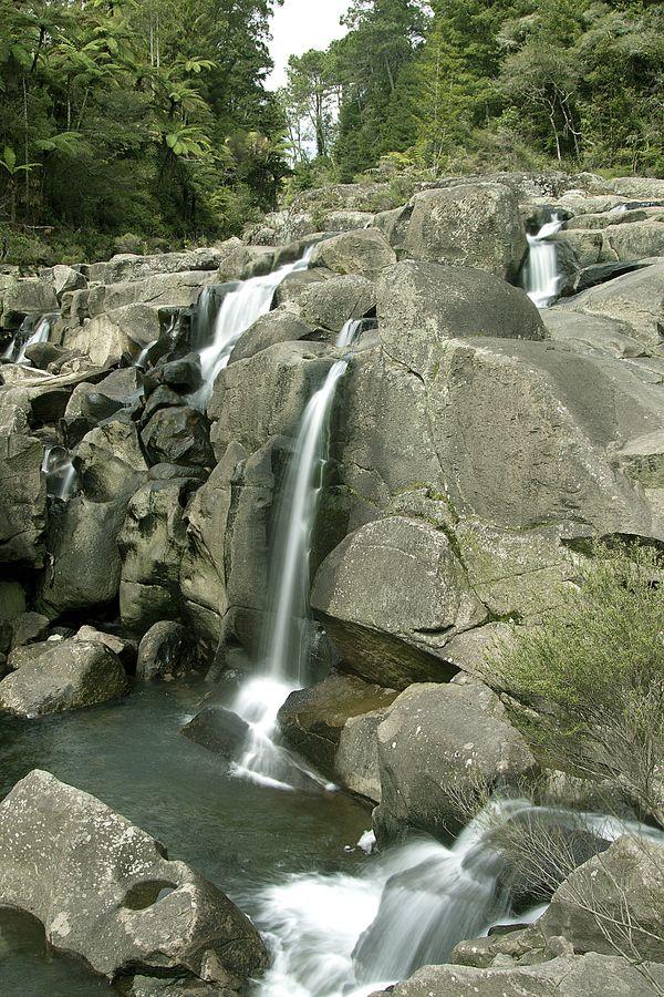 McClaren Falls #tauranga #newzealand.. favorite place to take the youth kids!