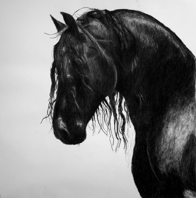 charcoal drawing of a black horse.