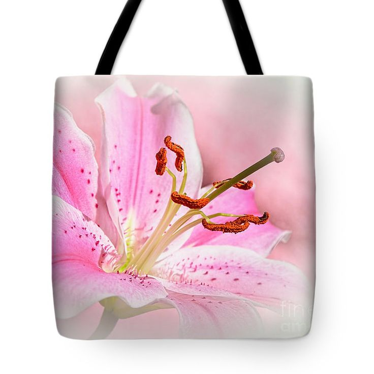 Photography Tote Bag featuring the photograph Stargazer Dreaming by Kaye Menner