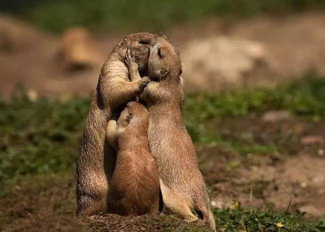 15 صورة عائلية رائعه تثبت ان الحيوانات مثل البشر احيانا