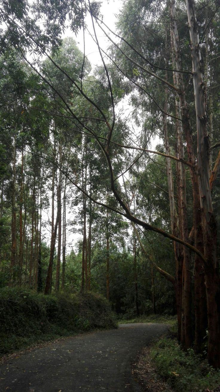Caminos #naturaleza #tree