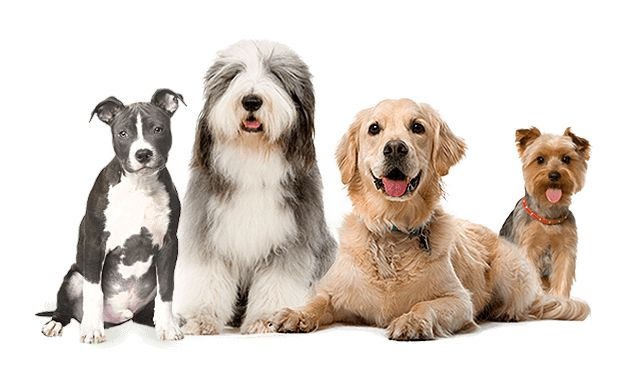 Animal Behavior College. Become a dog trainer.