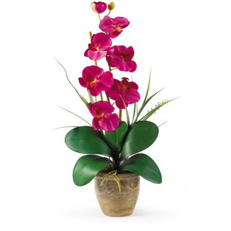 17 best ideas about orchid flower arrangements on for Arrangement petite cuisine