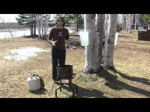 ▶ Comment faire du sirop de bouleau? - YouTube