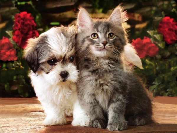 Pictures Of Cute Puppies And Kittens Together - Resimkoy