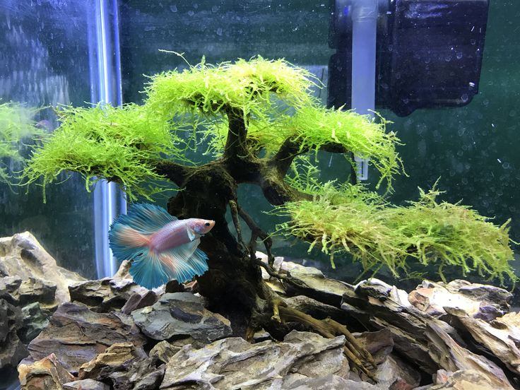 Aquarium Driftwood for Sale - Manzanita Driftwood Pieces