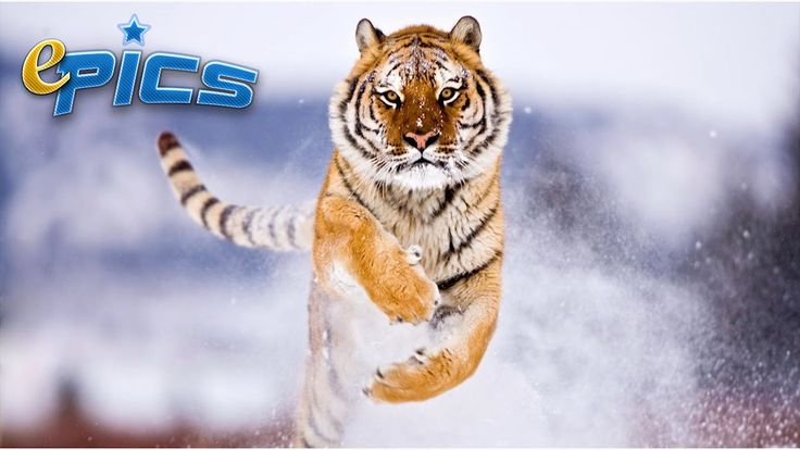 The MOST Spectacular Jumps of Animals - Top Best Jumper Animals