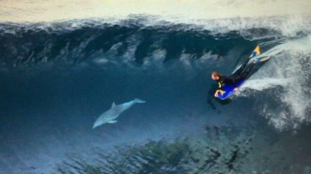 Tom and a dolphin is sweet. Footage from Throwdown DVD.  Clearing some room and am selling Blow Up and Throwdown for $15 including shipping. That's $15 for two full length movies delivered.  Link in Bio. ($25 total for international orders) #bodyboard #dolphin #dvd #sale #bodyboarding #surfing #ocean