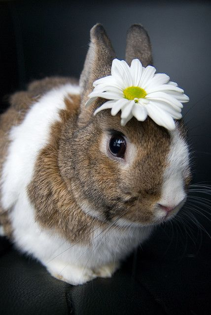 i wouldn't put a flower on my bunny like this, but i like this picture because this bunny looks like our bunny momo