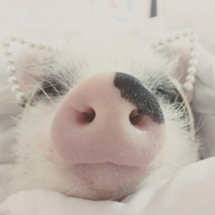 *miss piggy*