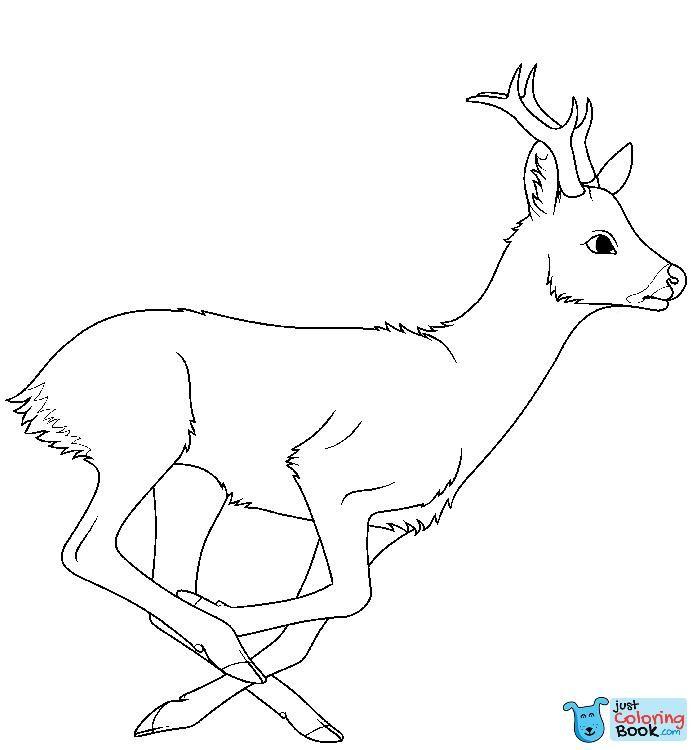 Running Roe Deer Coloring Page Free Printable Coloring Pages Within Roe Deer Coloring Pages