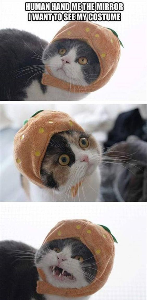 #funny #memes #lol #funnymeme #funnymemes #lolmemes #funnyjokes #jokes #love #beautiful #picoftheday #igers #girl #summer #bestoftheday #fun #smile #food #dog #cat #funnydog #funnycat #baby #funnybaby #babymemes #catmemes #dogmemes #photo #amazing #funnycat #funnydog #funnybaby #cute #cutedog #cutecat #cutebaby #viral #cutememes #viralmemes #crazy #crazymemes #funnypic #funnypics #funnypictures #lolz #loldog #lolcat #lolbaby #babylol #catlol #doglol