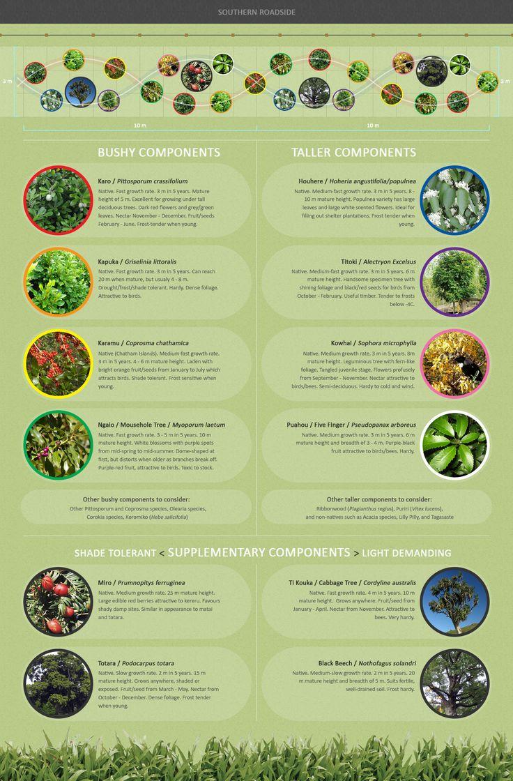 New Zealand native shelter belt planting infographic.