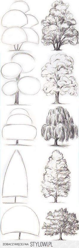 Tree drawing ideas, sketches of different kinds of trees.
