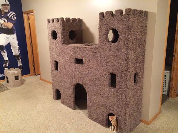 Camas, sofas, muebles a medida, filetes de atún fresco, sushi, langosta y hasta ipads . Algunos señores gatos hasta tienen su propio castillo. Desde...