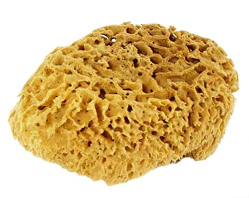 56 Inch Natural Sea Sponge For Bathing Cleaning and Sponge Painting -- More info could be found at the image url.