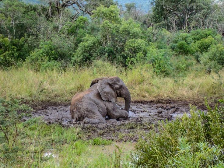 1st rains always bring much fun for the elephant