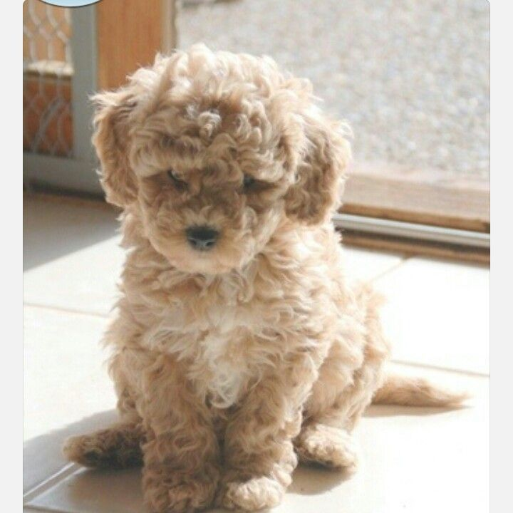 Cutie puppy cute stuff Pinterest Puppys and Pup patrol