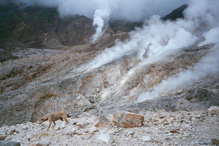 Travel Stories: Trekking Mount Papandayan by shufi · Lomography