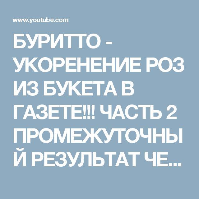 БУРИТТО - УКОРЕНЕНИЕ РОЗ ИЗ БУКЕТА В ГАЗЕТЕ!!! ЧАСТЬ 2 ПРОМЕЖУТОЧНЫЙ РЕЗУЛЬТАТ ЧЕРЕЗ НЕДЕЛЮ - YouTube    Комментарий важнее видео