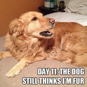 Funny Cat With Mother Dog Meme |#meme #cat #quotes #cats #humor =^..^= www.zazzle.com/kittyprettygifts #funny by maria.t.rogers