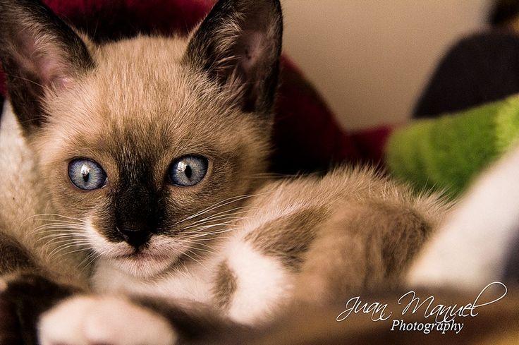 Gatito, bonitos ojos.