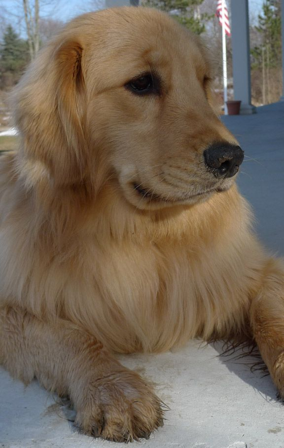 Newton — 1000 Goldens Project