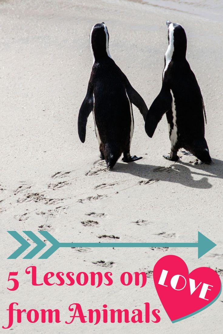 Speech on love towards animals