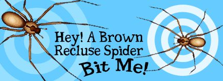 Hey! A Brown Recluse Spider Bit Me!