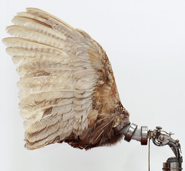 Fixed Pheasant Wings  Taxidermy pheasant wings, antique parts, mixed metal components  Lisa Black