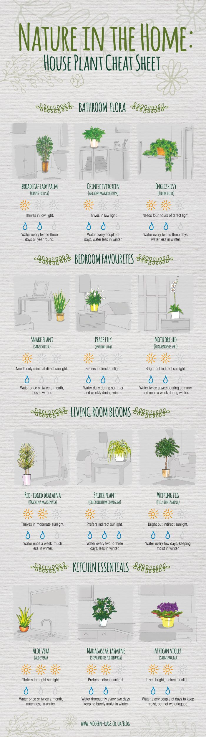 Beginners Guide To Houseplants Ultimate Guide Video