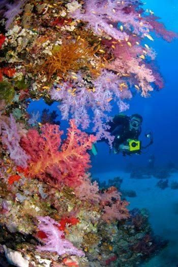 buceo corales
