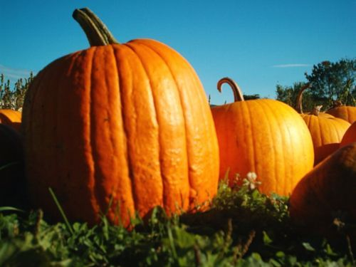 Benefits for healthcare pumpkins who provide various positive effects, one of whichovercome insomnia and boost immunity