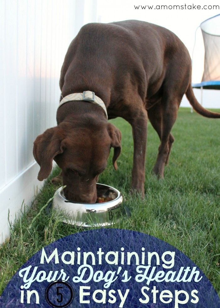 Lifesaving tips to make sure your dog always stays healthy! #FriendsofBeneful #ad