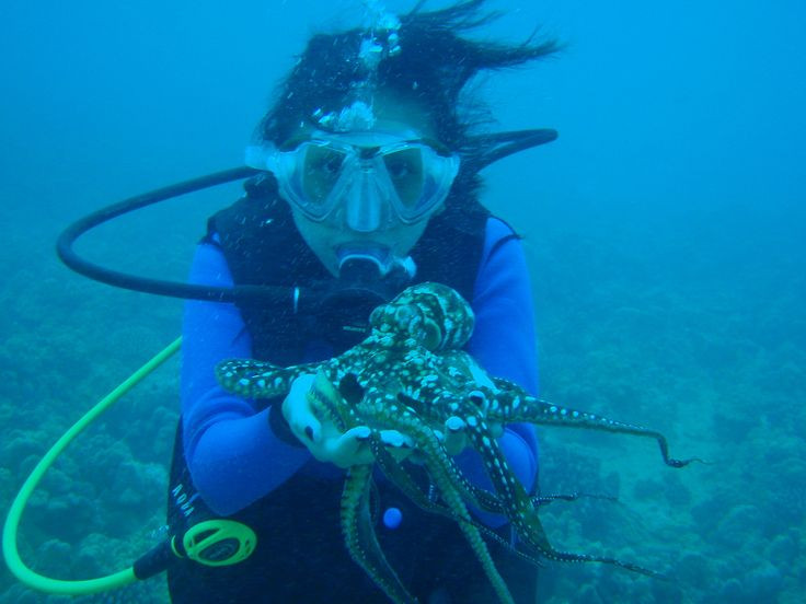 maui diver finding pearls in plunging Ty maui divers jewelry for making my experience so pleasant the sales people are pushy and offer discounts that go towards the pearl which is the cheapest things at the store before i knew it, i had spent almost $400 on the pearl and setting.