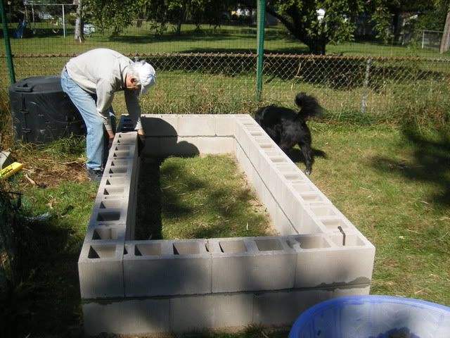 Raised cinder block garden.  Plant marigolds in the holes to keep bugs away :)